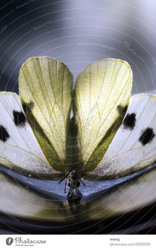 Schmetterlingsyoga mit Herz Tier dunkel Traurigkeit außergewöhnlich Tod braun authentisch Flügel sportlich zart dünn gruselig skurril bizarr