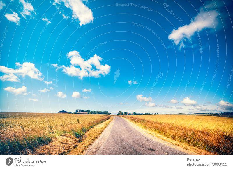Straße, die im Sommer zu einem Bauernhof führt. schön Ferien & Urlaub & Reisen Sonne Natur Landschaft Erde Himmel Wolken Baum Gras Blatt Wiese Verkehr