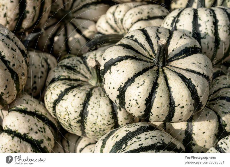 Gestreifter Squash-Stapel. Hintergrund mit einer Vielzahl von Kürbissen Gemüse Bioprodukte Vegetarische Ernährung Erntedankfest Halloween Gastronomie Herbst