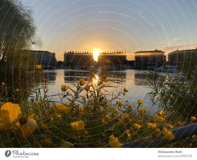 Sonnenuntergang, Bahia de Nordelta, Buenos Aires, Argentinien ruhig Wasser Himmel Wolkenloser Himmel Sonnenaufgang Sonnenlicht Sommer Schönes Wetter Pflanze