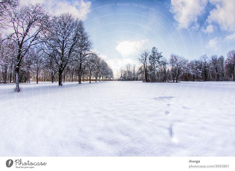 Schneereicher Weg in mehrere Bäume im Wald schön Ferien & Urlaub & Reisen Winter Umwelt Natur Landschaft Himmel Wolken Baum Park Straße Wege & Pfade fahren