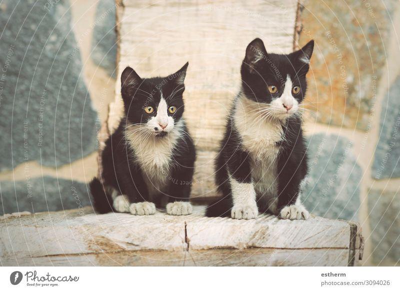 """Porträt von süßen Kätzchen Garten Tier Haustier Katze Pfote liegen sitzen klein niedlich Schutz """" Katzen, Kätzchen, Katzen, Katzen.... häuslich,Kätzchen"""