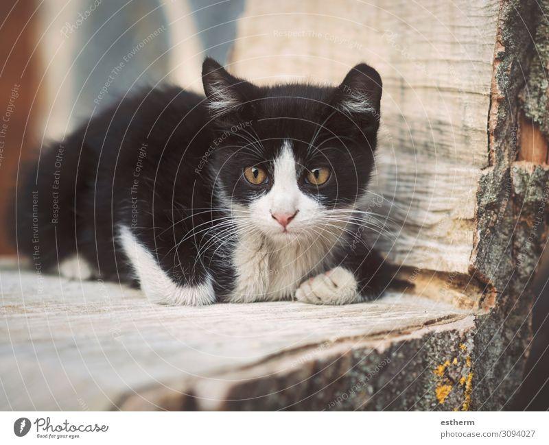 """Porträt eines entspannten süßen Kätzchens Garten Tier Haustier Katze Pfote krabbeln liegen sitzen klein niedlich """"Katze, Kätzchen, Katze, Katze""""."""