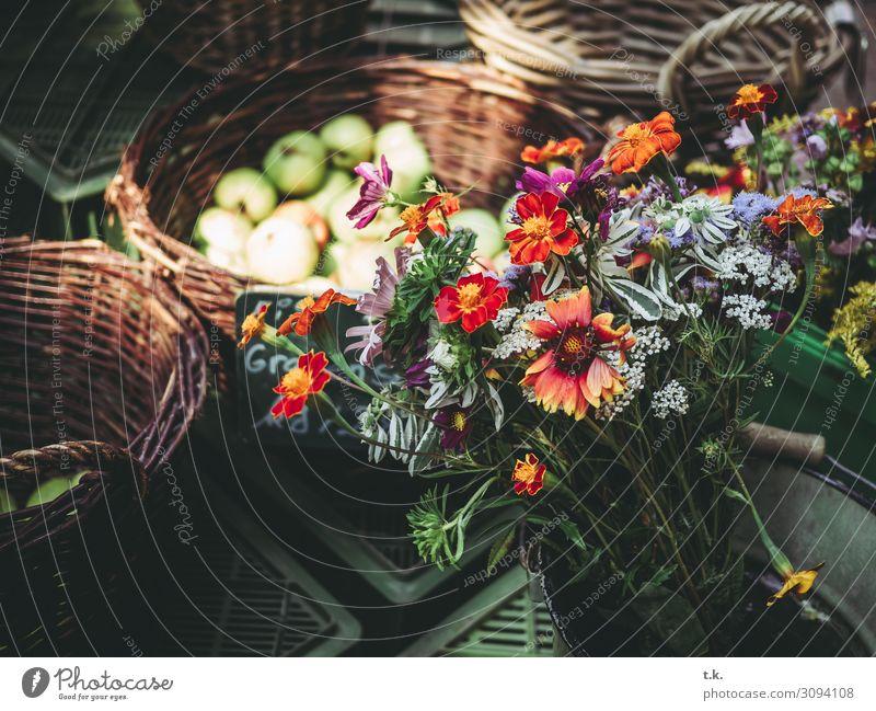 Herbststräuße Gemüse Frucht Bioprodukte kaufen Wohlgefühl Zufriedenheit Sommer Umwelt Pflanze Blume blau braun grau orange rot Markt Wochenmarkt Blumenstrauß