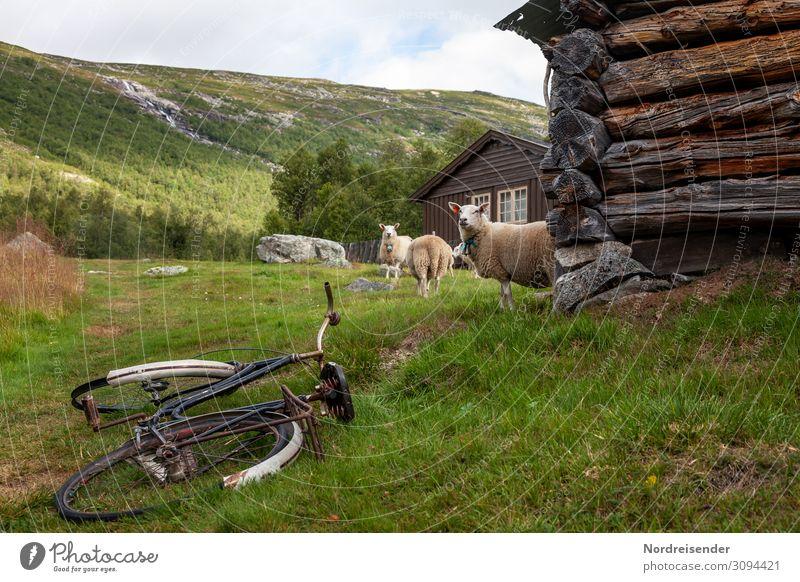 Ländliche Idylle Ferien & Urlaub & Reisen Tourismus Freiheit Fahrradtour wandern Landwirtschaft Forstwirtschaft Natur Landschaft Gras Wiese Wald