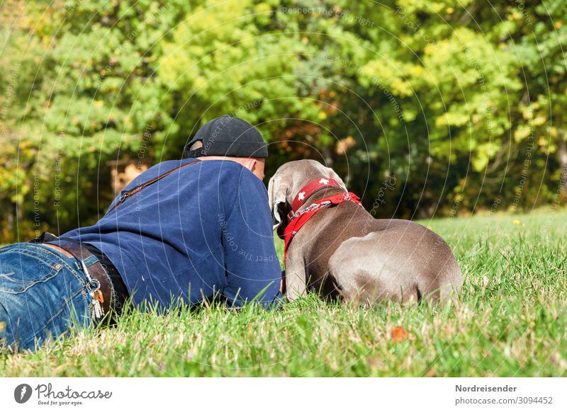 Wertvoll | gemeinsame Zeit Mensch Natur Hund Mann Sommer Erholung Freude Wald Lifestyle Erwachsene Herbst Wiese Glück Gras Zusammensein Freundschaft