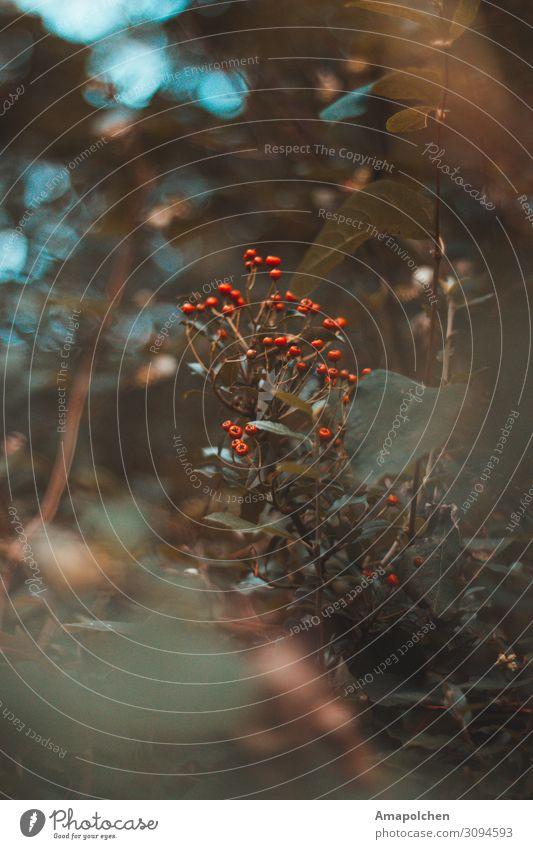 ::19-02:: Ferien & Urlaub & Reisen Natur Sommer Pflanze Erholung Berge u. Gebirge Herbst Umwelt Tourismus Ausflug Freizeit & Hobby wandern Wetter Sträucher