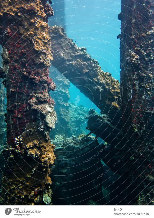 Korallenkruste kollabiert Pier Unterwasser in Hawaii Freude Leben Ferien & Urlaub & Reisen Abenteuer Meer tauchen Natur Landschaft entdecken außergewöhnlich