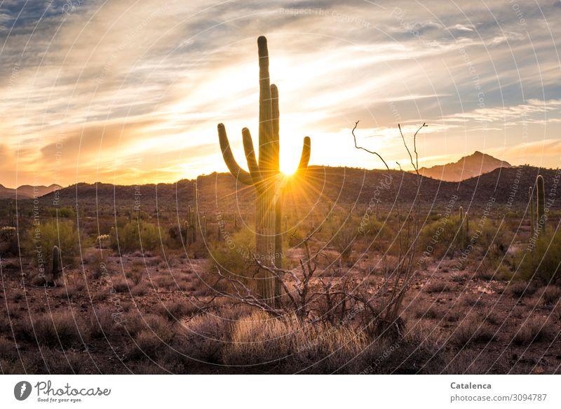 Eingefangen Ausflug Ferne Freiheit wandern Umwelt Natur Landschaft Himmel Wolken Horizont Sonnenaufgang Sonnenuntergang Sonnenlicht Schönes Wetter Dürre Baum