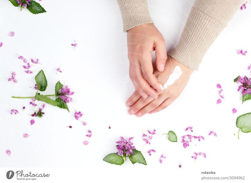 zwei weibliche Hände und eine dicke Creme, Draufsicht Körper Haut Maniküre Behandlung Medikament Wellness Spa Dekoration & Verzierung Frau Erwachsene Hand
