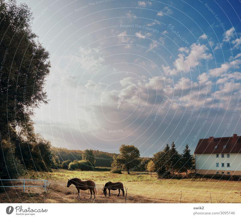 Siesta Umwelt Natur Landschaft Himmel Wolken Horizont Herbst Schönes Wetter Baum Gras Sträucher Wiese Dorf Haus Pferd 2 Tier Erholung Fressen stehen Idylle