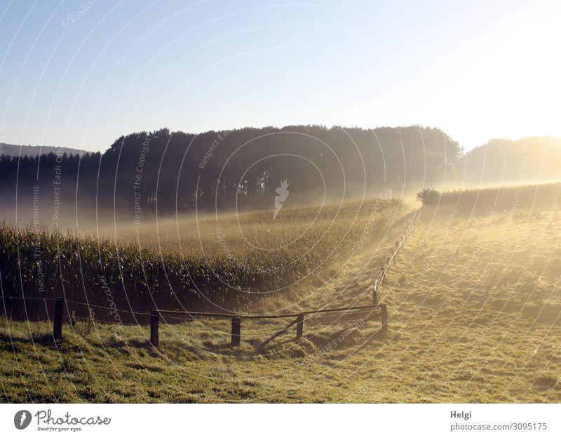 Landschaft mit Wiesen, Feldern und Bäumen bei Morgensonne und Nebel Umwelt Natur Pflanze Wolkenloser Himmel Herbst Baum Gras Nutzpflanze Mais Wald Zaun Wachstum