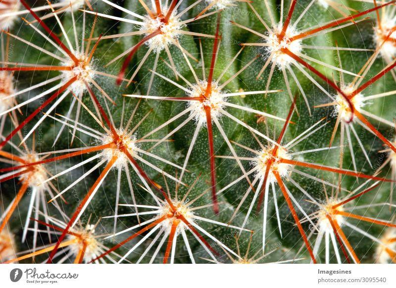 """Dornen - Kaktus Pflanze exotisch stachelig grün orange rot Schmerz """"Dornen kateen Nahaufnahme Hintergrund Vollbild dorn dornig abstrakt schön botanisch botanik"""