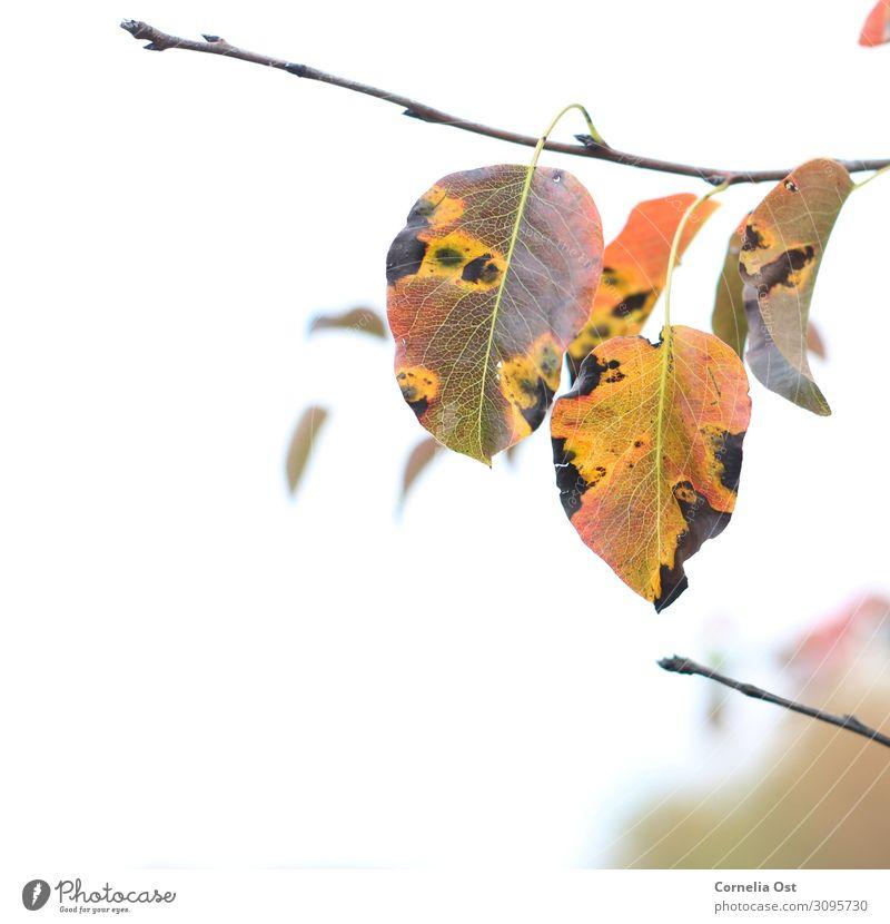 Herbstbeginn Zufriedenheit Sinnesorgane Erholung ruhig Spaziergang Umwelt Natur Pflanze Schönes Wetter Baum Blatt Park verblüht dehydrieren natürlich trocken