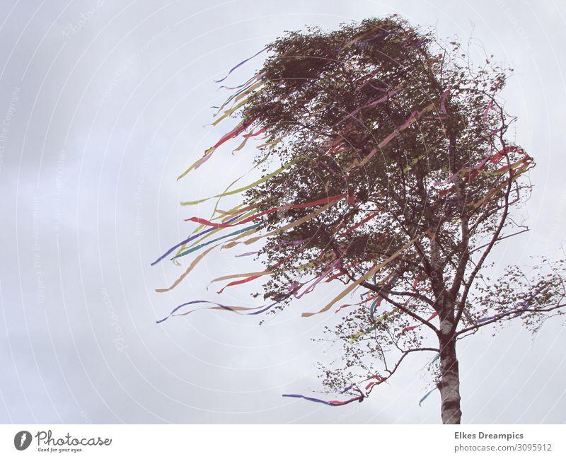 Maibaum Kultur Natur Himmel Frühling schlechtes Wetter Wind Sturm Papier Dekoration & Verzierung Schleife Feste & Feiern genießen mehrfarbig Frühlingsfest Birke