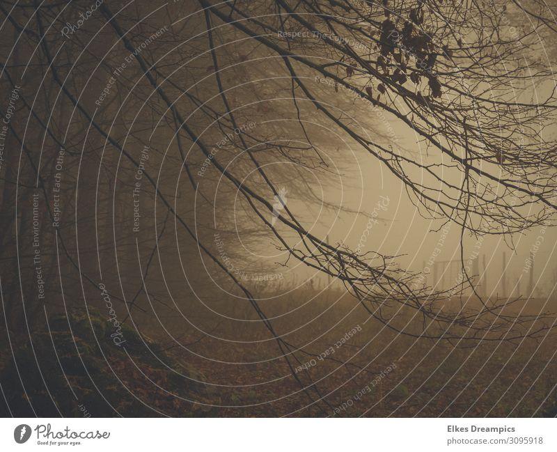 Nebel im Wald Natur Landschaft Herbst schlechtes Wetter dunkel gruselig braun grau Zweige u. Äste Gedeckte Farben Außenaufnahme Tag Schatten