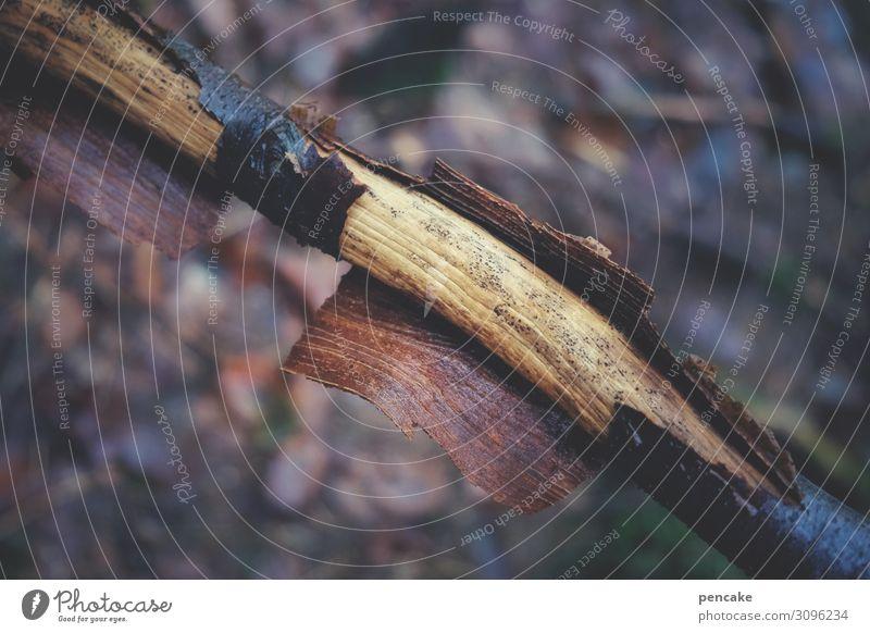 hautsache | abgeschält Natur Pflanze Baum Wald dunkel Herbst Erde Haut authentisch Ast Urelemente trocken Baumrinde häuten schutzlos Schutzhülle