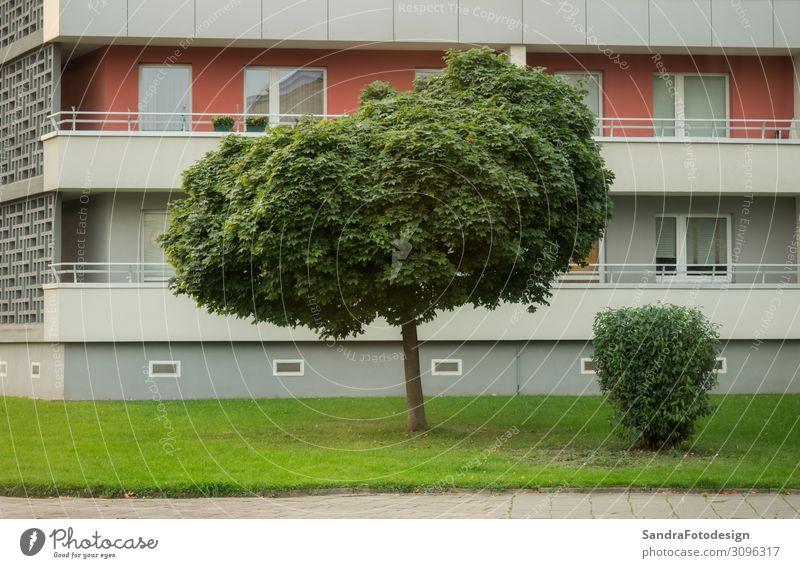 Lawn and tree in front of a high rise in the city Wohnung Haus Business Park Hochhaus Mauer Wand Balkon Zufriedenheit Geborgenheit lawn green grass Großstadt