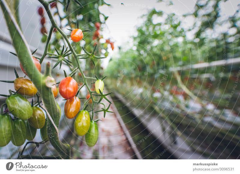 Mega Glasshouse for Tomatoes and Pepper Arbeit & Erwerbstätigkeit Wachstum Bio Harvest agriculture bloom breed breeding childhood conservatory
