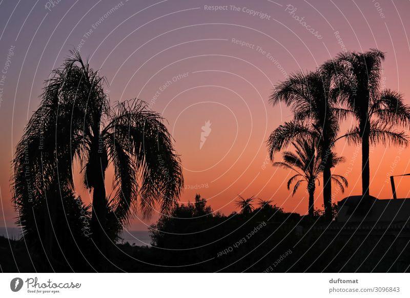 Kitsch as Kitsch can Reichtum Ferien & Urlaub & Reisen Tourismus Ferne Natur Landschaft Sonnenaufgang Sonnenuntergang Sommer Klima Schönes Wetter exotisch Palme