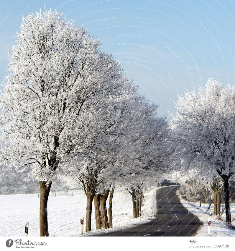 Winterlandschaft mit kurviger Straße, raureifbedeckten Bäumen und blauem Himmel Umwelt Natur Landschaft Pflanze Schönes Wetter Eis Frost Schnee Baum Feld