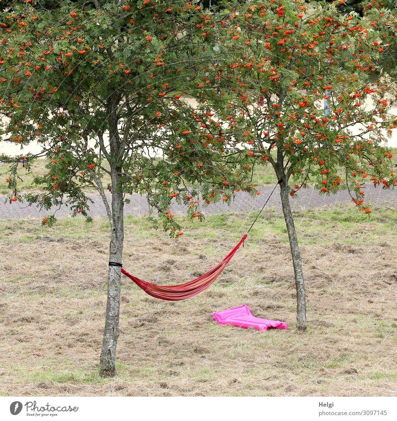auf einer Wiese zwischen zwei Bäumen hängt eine rote Hängematte, darunter liegt eine rosa Luftmatratze Umwelt Natur Landschaft Pflanze Sommer Baum Gras