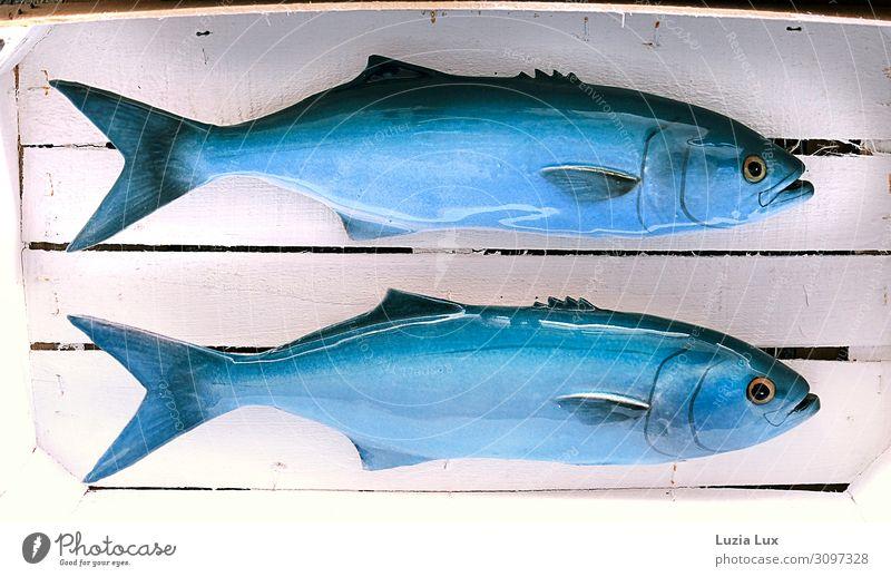 kalte Fische Lifestyle kaufen Schuppen 2 Tier blau weiß Tourismus Dekoration & Verzierung falsch falsche Fische Kiste Auge Kitsch Im Wasser treiben mehrfarbig