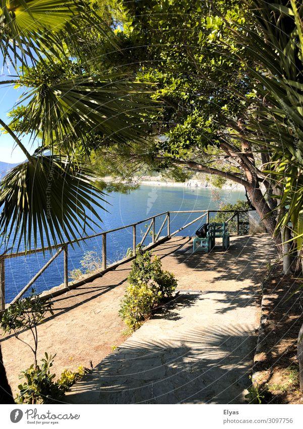 Palm trees, Italy, summer, Ferien & Urlaub & Reisen Ausflug Abenteuer Ferne Freiheit Sommer Sommerurlaub Meer Natur Landschaft Sand Luft Wasser Himmel