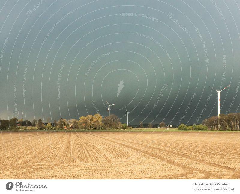 aufziehendes Unwetter über einem Getreidefeld Umwelt Natur Landschaft Himmel Wolken Gewitterwolken Horizont Wetter Baum Windrad bedrohlich dunkel hell schön