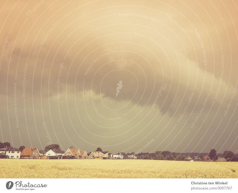 aufziehendes Unwetter über einem Dorf Umwelt Natur Landschaft Gewitterwolken Sommer schlechtes Wetter Baum Feld bedrohlich Ferne braun gelb grau Gefühle