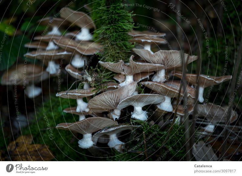Ansiedlung Natur Herbst Pflanze Moos Pilz Wald Blühend Wachstum frisch Zusammensein weich braun grau grün weiß achtsam standhaft entdecken Farbfoto mehrfarbig