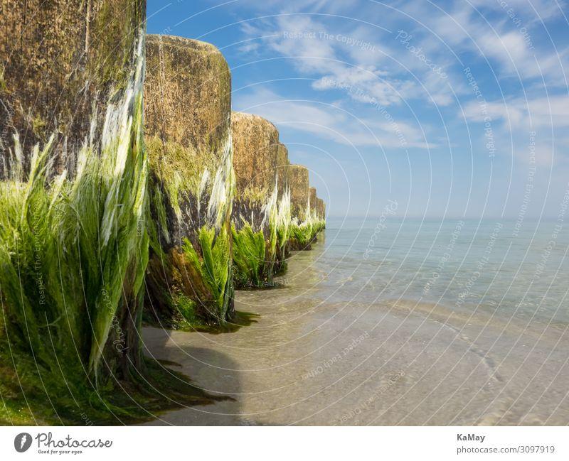 Ganz nah dran Strand Meer Umwelt Natur Schönes Wetter Algen Küste Ostsee Holz Linie blau grün Farbe Horizont ruhig Sicherheit Symmetrie diagonal Buhne