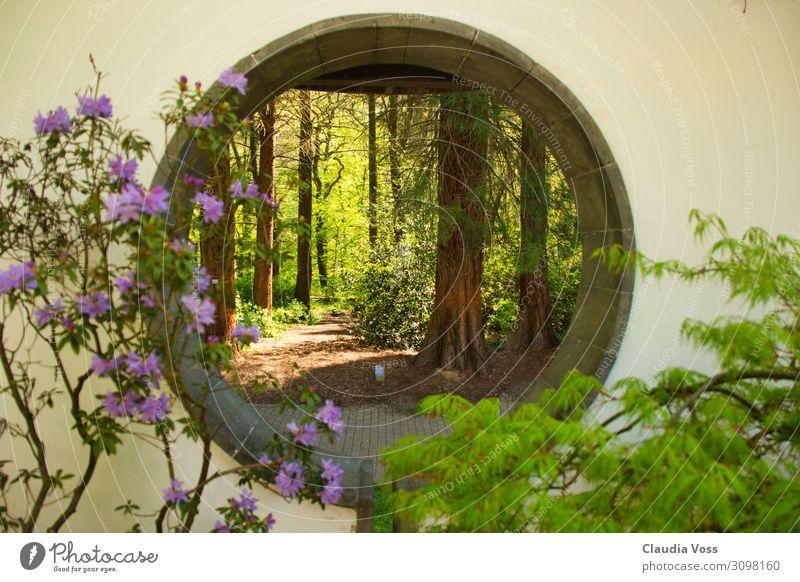 Auf der anderen Seite Natur Landschaft Tier Baum Garten Park Stimmung Glück Zufriedenheit Frühlingsgefühle Vorfreude Begeisterung Erfolg Sicherheit Schutz