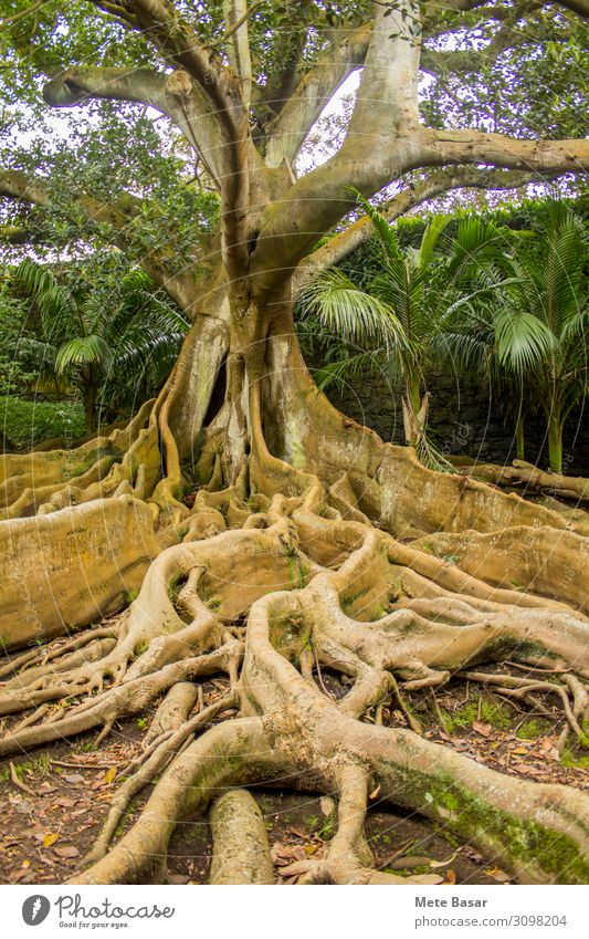 Natur Pflanze Baum Gesundheit Wand Umwelt Senior natürlich Mauer Zusammensein Park Erde Wachstum Kraft Wellness Zusammenhalt