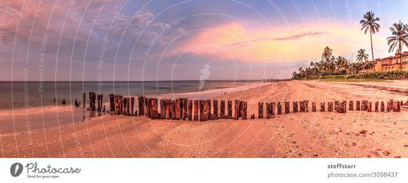 Alter Pier im Meer am Port Royal Beach bei Sonnenaufgang Erholung Ferien & Urlaub & Reisen Strand Natur Landschaft Küste blau rosa Port Royal Strand Neapel