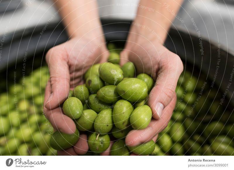 Oliven Frucht Arbeit & Erwerbstätigkeit Mensch Frau Erwachsene Mann Hand grün Tradition zeigen Besichtigung Fermentation Kuration Wahl selektiv Auswahl