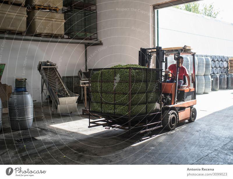Gabelstaplerarbeiter Frucht Arbeit & Erwerbstätigkeit Beruf Arbeitsplatz Fabrik Industrie Mann Erwachsene Pflanze Verkehr Fahrzeug fahren authentisch oliv