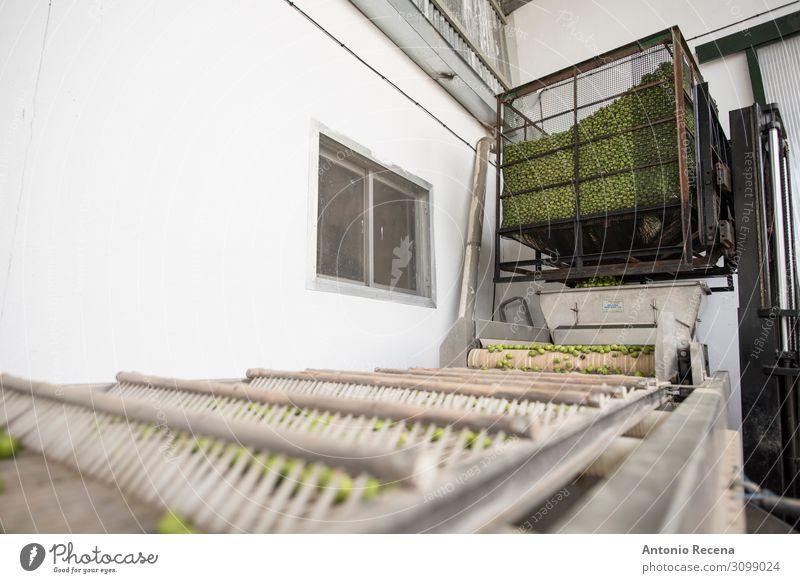 Olivenfabrik Frucht Fabrik Industrie Business Unternehmen Verkehr frisch Kontrolle Qualität Pfand Förderband Gurt Geschäft Anordnung Lebensmittel industriell