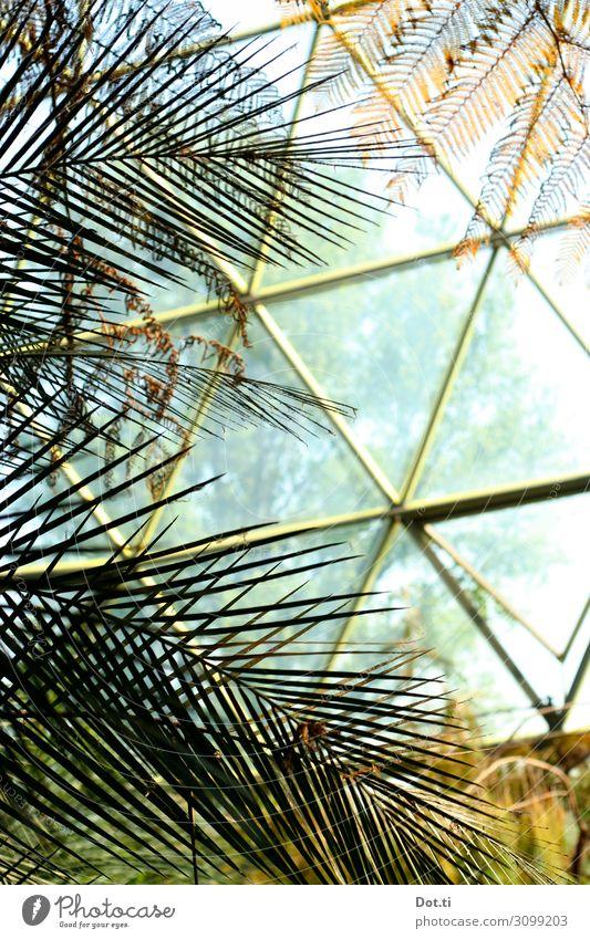 hothouse Pflanze Wärme Wachstum Glas Klima Schutz exotisch tropisch Kuppeldach Dreieck Gewächshaus Palmenwedel