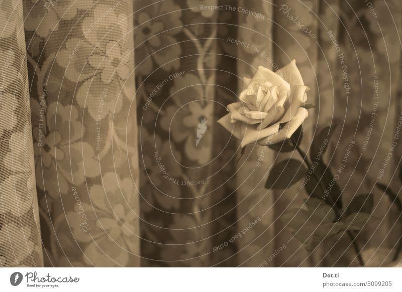 a rose Häusliches Leben Blume Rose retro Gardine geblümt altmodisch Fensterbrett Blüte Farbfoto Gedeckte Farben Muster Menschenleer Textfreiraum links Tag