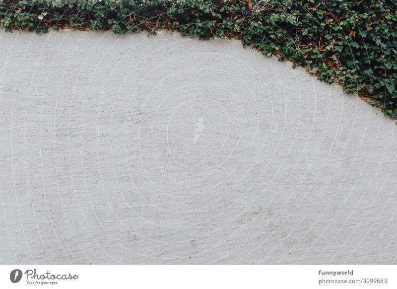 Die Wand mit grün Menschenleer Mauer Efeu Immergrüne Pflanzen neutral weiß Hintergrundbild Hintergrund neutral Natur ländlich bewachsen Rahmen Farbfoto
