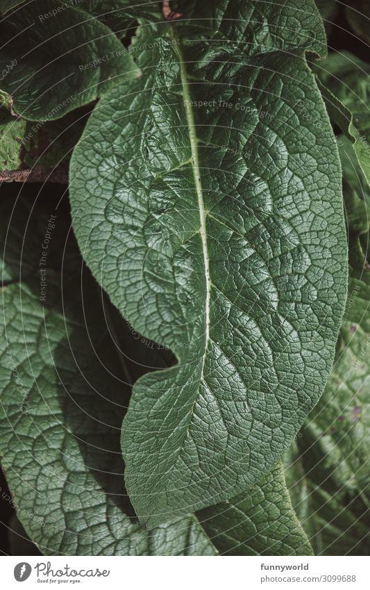 Grünes Blatt mit Adern grün Pflanze Natur Makroaufnahme Detailaufnahme Grünpflanze Struktur Strukturen & Formen Nahaufnahme Außenaufnahme Sommer Blattadern