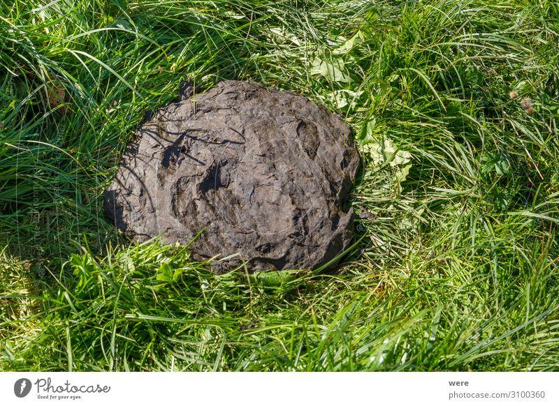 fresh cow dung in the green grass Natur Tier natürlich weich Duft Kuh Düngung