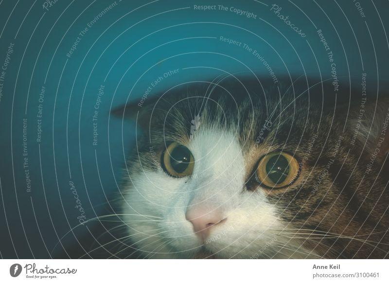 """Kater in der Höhle Tier Haustier Katze Tiergesicht 1 natürlich Neugier niedlich Freude Tierliebe dankbar achtsam Wachsamkeit entdecken Hilfsbereitschaft """"Katze"""