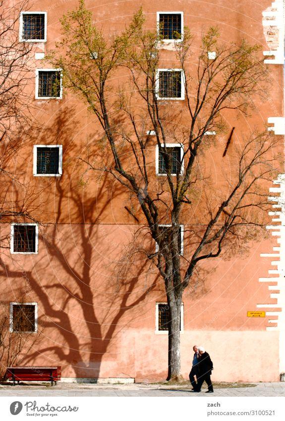 Spaziergang Mensch Mann alt Pflanze Stadt Baum Haus Fenster Erwachsene Wand Senior Mauer braun Fassade maskulin 60 und älter