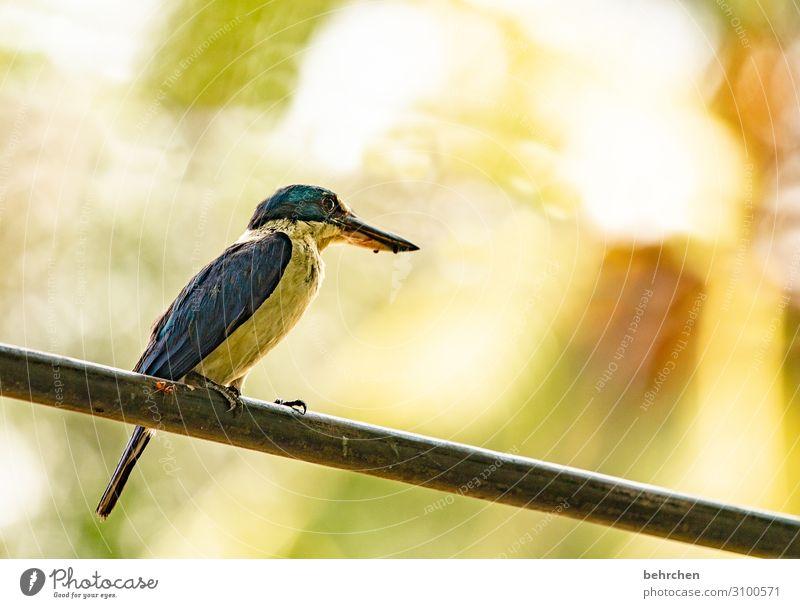 eine ameise auf dem drahtseil Ferien & Urlaub & Reisen Tourismus Ausflug Abenteuer Ferne Freiheit Wildtier Vogel Tiergesicht Flügel Feder Ameise Schnabel