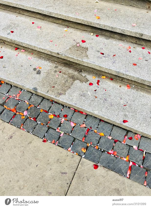 All those lonely parties... Party Treppe dreckig Hochzeit Ende Fleck Blütenblatt Konfetti Sekt Rathaus Missgeschick schmuddelig