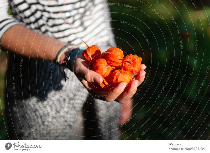Herbst Ernährung Vegetarische Ernährung Wohlgefühl Zufriedenheit ruhig Meditation Duft Erntedankfest feminin androgyn 8-13 Jahre Kind Kindheit 13-18 Jahre
