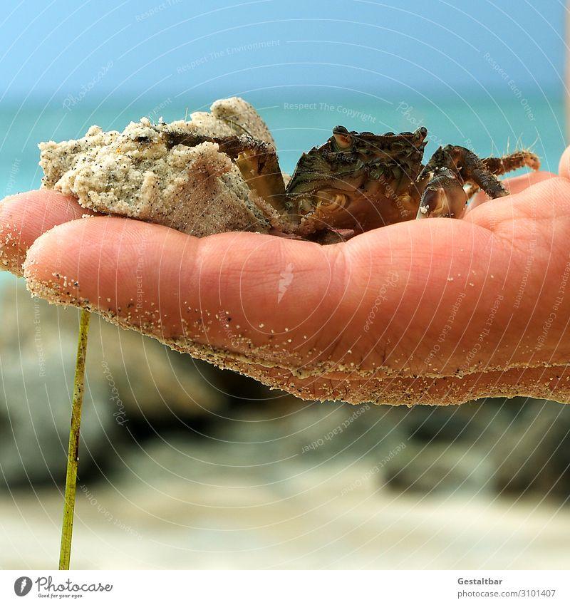 Guter Fang! Natur Sommer blau Wasser Landschaft Hand Meer Tier Strand braun Sand maskulin Schönes Wetter beobachten Italien berühren