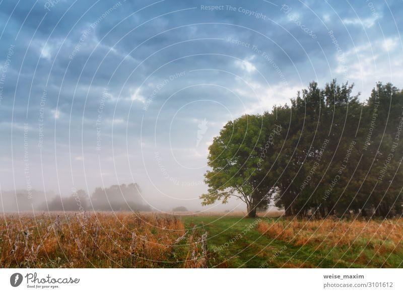 Bedeckter, nebliger Himmel. Bewölkter Herbstnebelmorgen. schön Ferien & Urlaub & Reisen Sommer Umwelt Natur Landschaft Luft Wolken Sonnenaufgang Sonnenuntergang